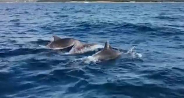 Video: 'Prišli su nam na metar, pratili su naš brod 20 minuta'