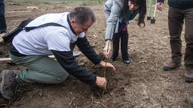 Kod Osijeka  počinje obnova više od 1000 ha šume oštećene od mina, rata i propadanja
