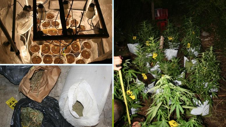 Policija pronašla 5 laboratorija, plantažu i 18 kg marihuane: Uhitili su 2 djevojke i mladića