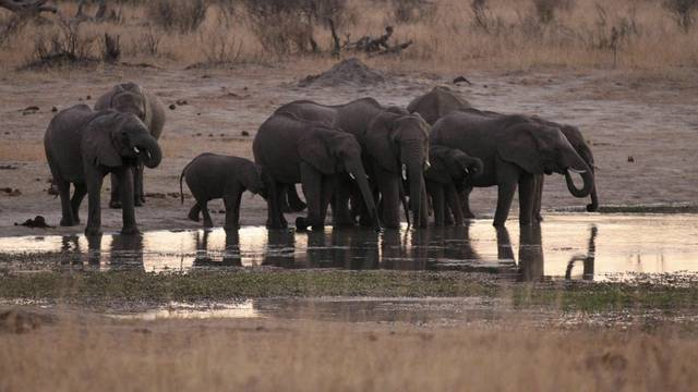 FILE PHOTO: A herd of elephants gather at a water hole in Zimbabwe's Hwange National Park