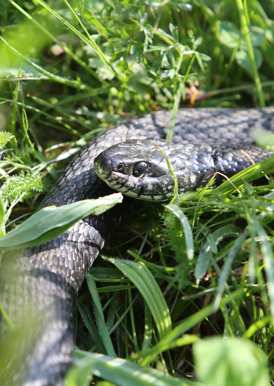 Kampericu je u šatoru ugrizla zmija: Prevezli ju na liječenje