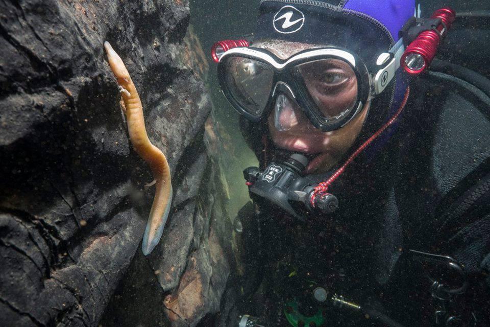 Predator iz podzemlja: Petra sedam godina lovi - 'zmajeve'