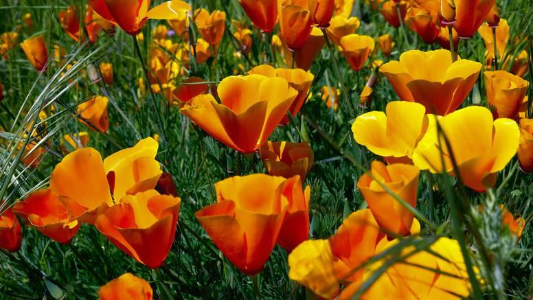 Kako, kad i gdje treba orezivati cvijeće kako bi vrt bio bujniji?
