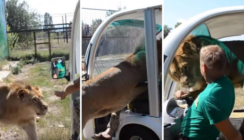 Lav ušao u vozilo s turistima, izgurao je vozača sa sjedala