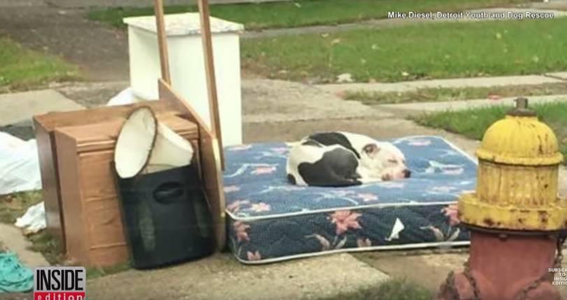 Vlasnik odselio i ostavio ga na smeću, on ga je strpljivo čekao