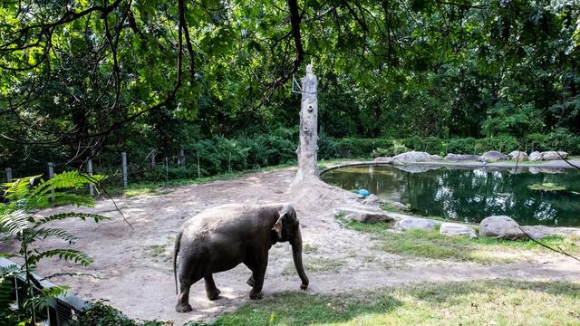 Tužna slonica Srećka: Pustite ju, depresivna je već 13 godina