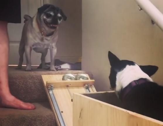 Pasolift: Genijalna ideja za tri psa, od kojih je jedan i ozlijeđen