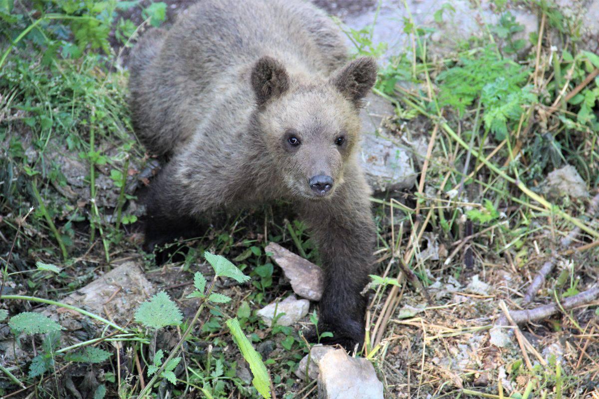 Pogledajte kako se medvjedić Matija snašao u novome domu