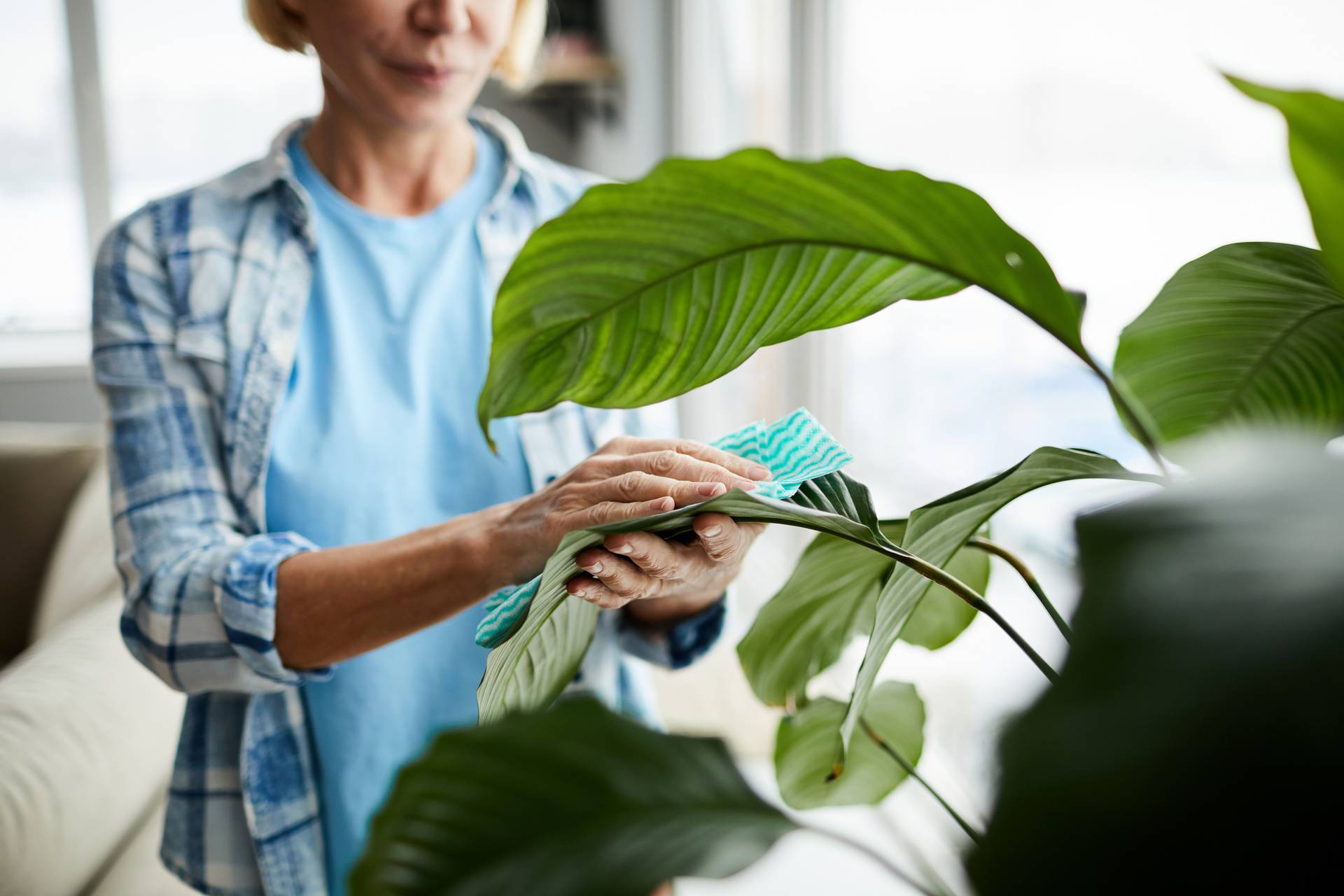Što se dogodilo vašoj biljci? Saznajte i reagirajte na vrijeme