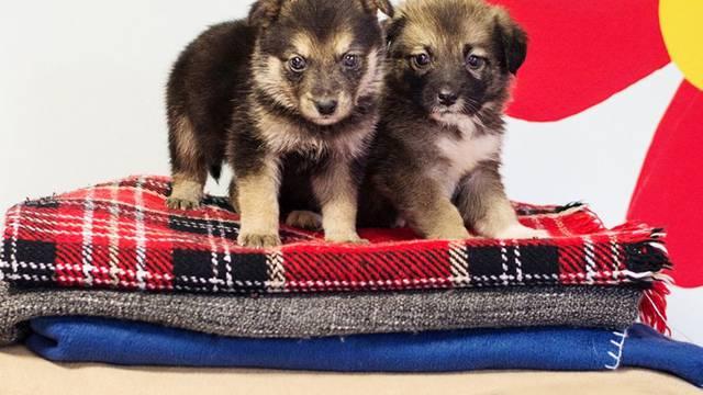 Da im ne bude zima: Sklonište Dumovec za psiće skuplja deke