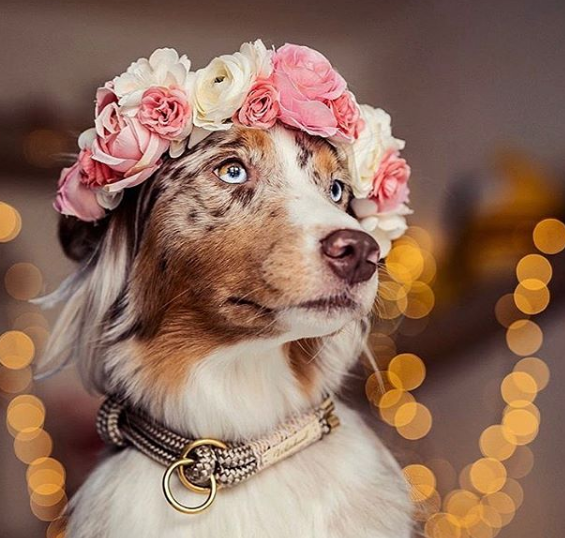 Za ljubimce izrađuje cvjetne krune: Izgledaju veličanstveno