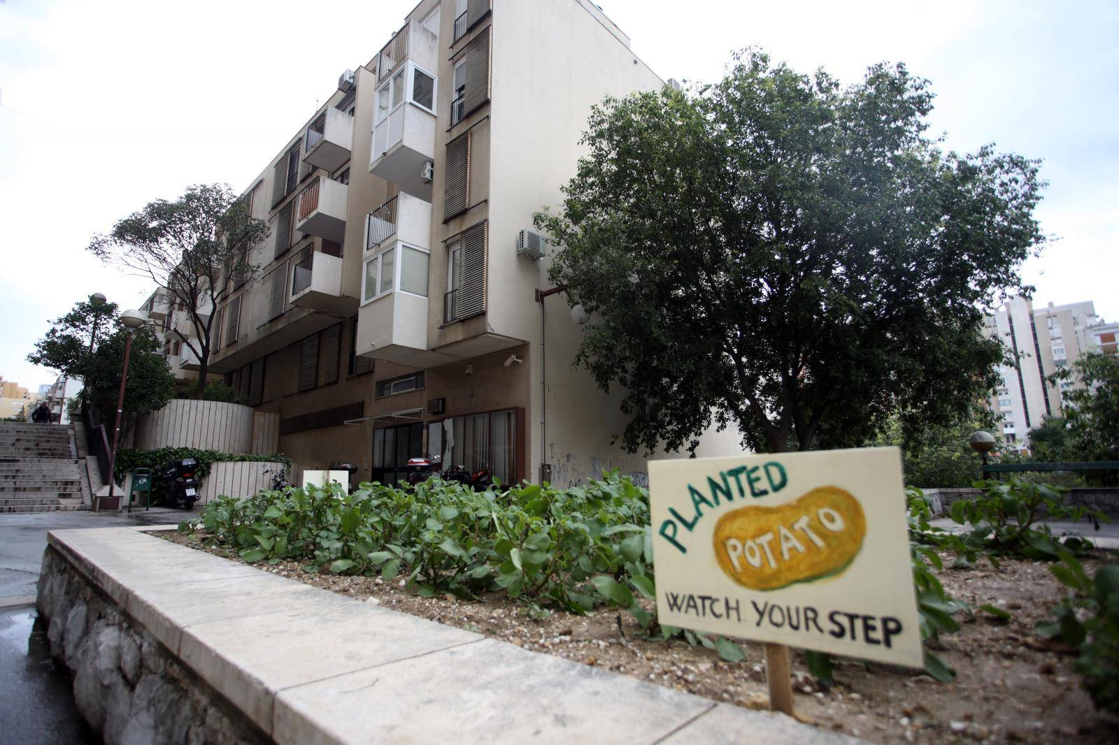 Split: Stanovnici Papandopulove ispred zgrade zasadili krumpir