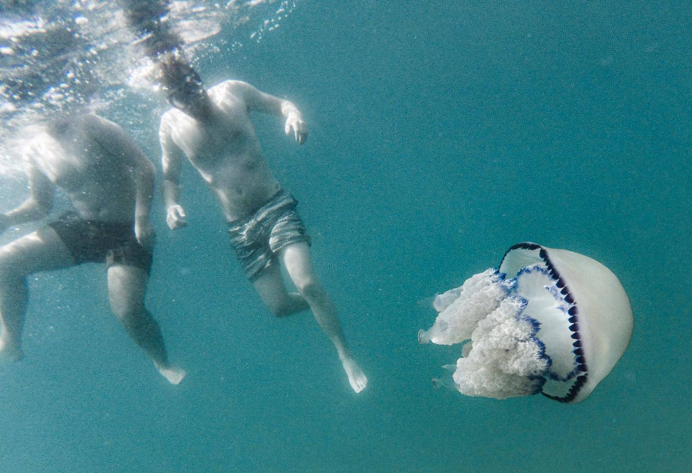 Video: Plivali smo s meduzom