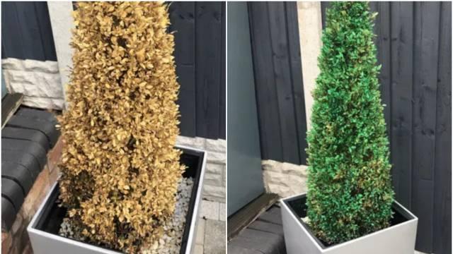 Super savjet: 'Oživite' osušene biljke uz pomoć spreja u boji