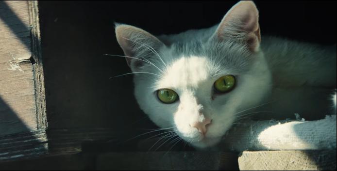 Maca u lovu na crvenu točku najavila izlazak Ghost Recona