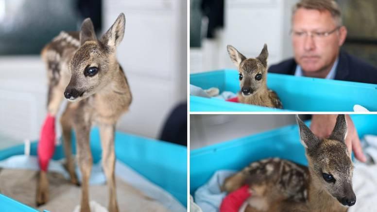 Bambi na Črnkasu: Hrabro lane ozlijeđeno je u košnji  trave, sad se oporavlja, svi ga maze i paze