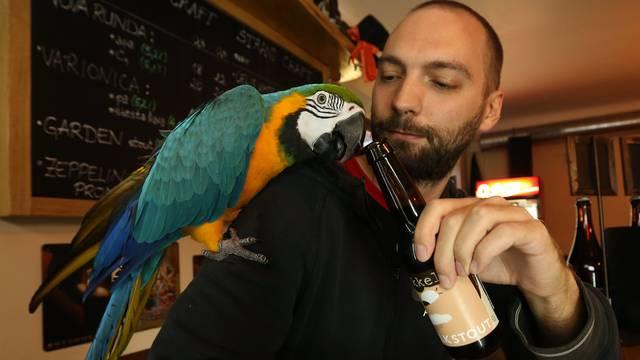 Konobar s krilima: Svi vole kad im pivo otvori papagaj Jack