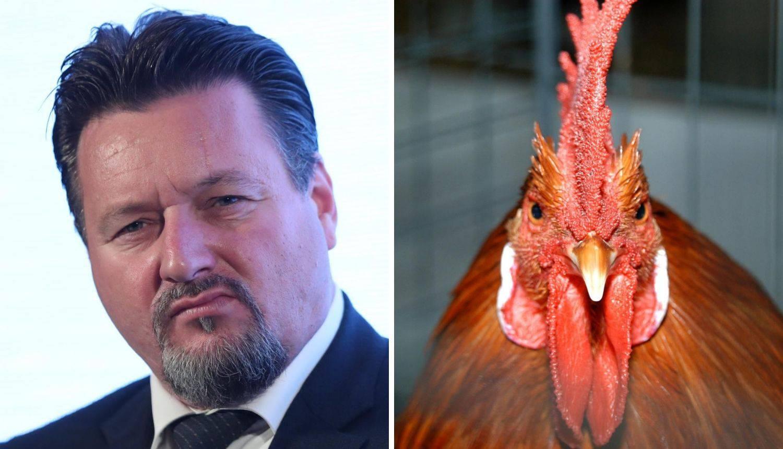 Kuščević: Uzgajao sam kokoši, a najdraža mi je kokoš hrvatica
