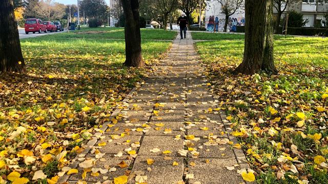 Kad si učenik u Splitu, nema ništa gore od sastava o jeseni