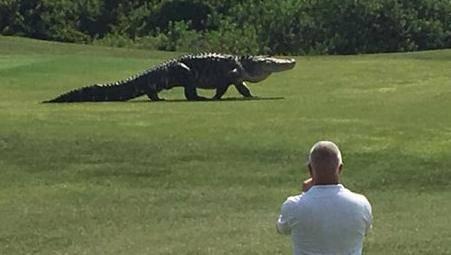 Opuštali su se uz golf, a onda su im se svima 'odsjekle' noge