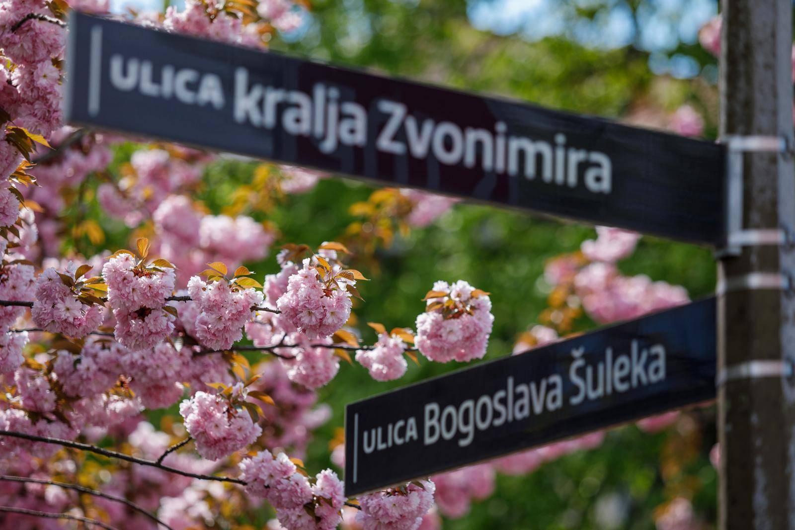 U vrijeme cvatnje Šulekova ulica postaje jedna od najljepših ulica u Zagrebu