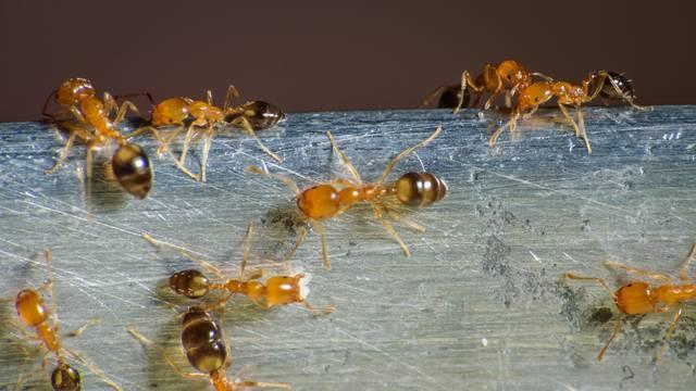 Lončanice su vam pune mrava? Riješite potencijalnu najezdu ovim lakim kućnim pripravcima