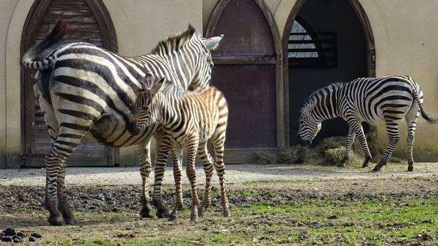 Vatrogasci su dali ime maloj zebri: 'Nek' se zove Iskra...'