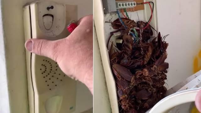 Ogromni žohari preplavili kuće: 'Neki prenose čak i salmonelu'