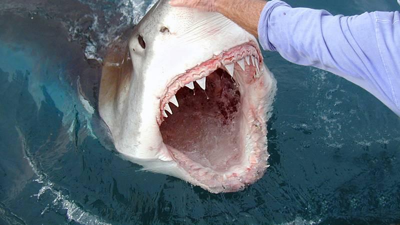 12 činjenica koje sigurno niste znali o napadima morskih pasa