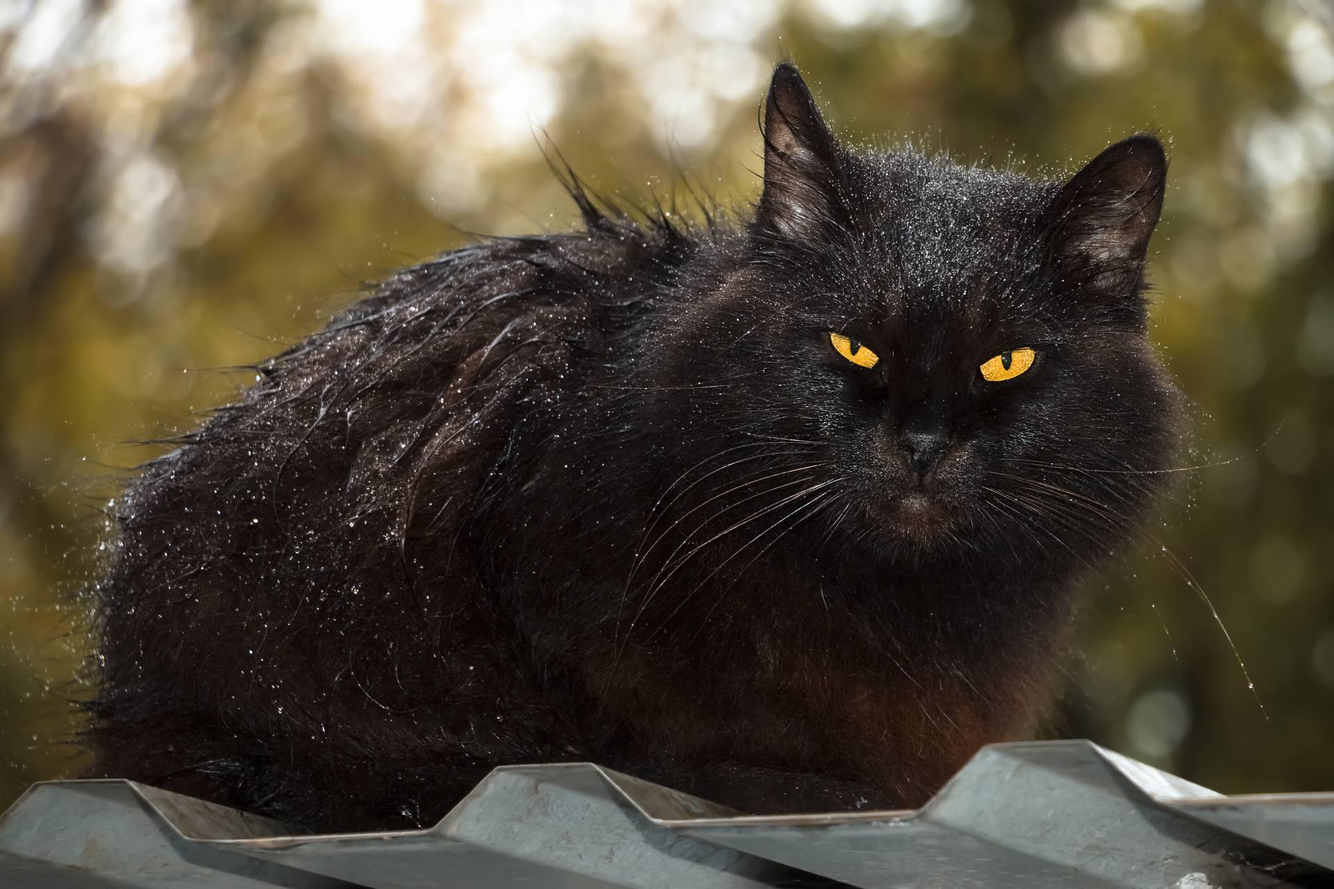 Znate li zašto mačke mrze vodu?