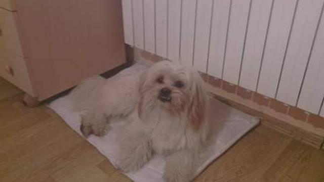Ubili su djetetu psa: Maltezer pobjegao pa ga našli mrtvog
