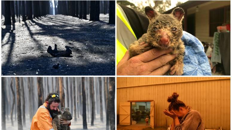 Fotke iz Australije koje slamaju srca: Uginuli milijuni životinja