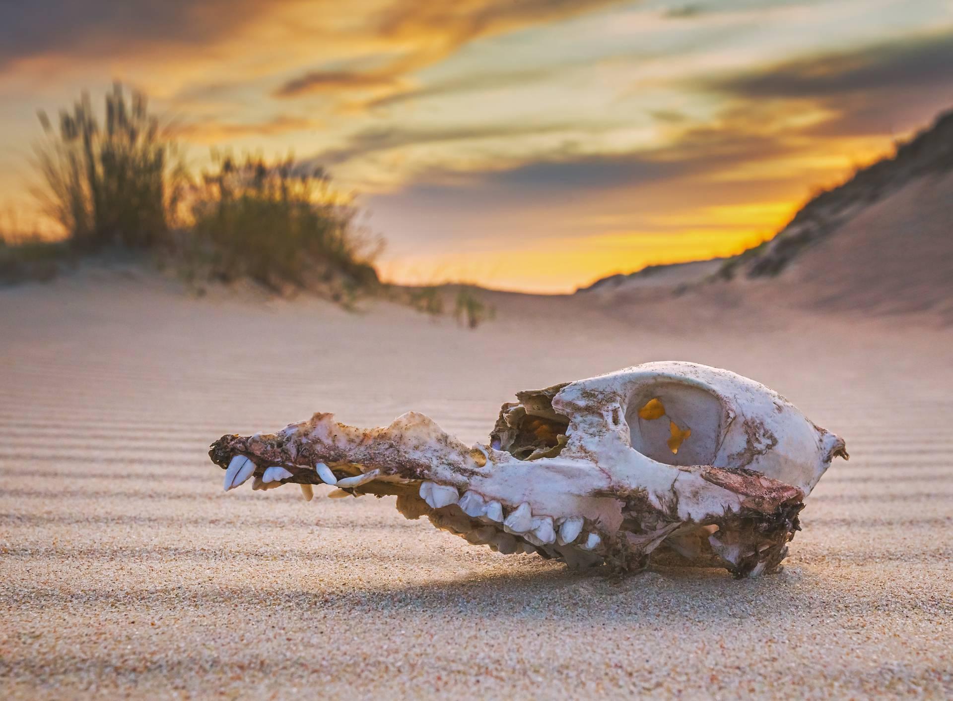Do 2050. izumrijet će 10 posto vrsta, a za 100 godina i čovjek