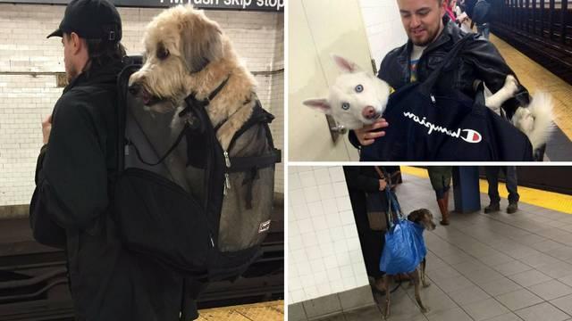 Pas mora biti u torbi dok se vozi podzemnom - presmiješno