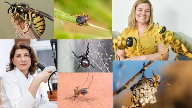 Ljetne napasti: Stručnjaci otkrili kako se riješiti stršljena, ujeda stjenica, krpelja, mrava i pčela