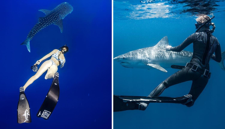 Kayleigh je šaptačica morskim psima: 'Mazim se s njima, želim pokazati da nisu uopće opasni'