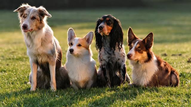 Sredstvo protiv krpelja za pse ljudi nikako ne smiju koristiti