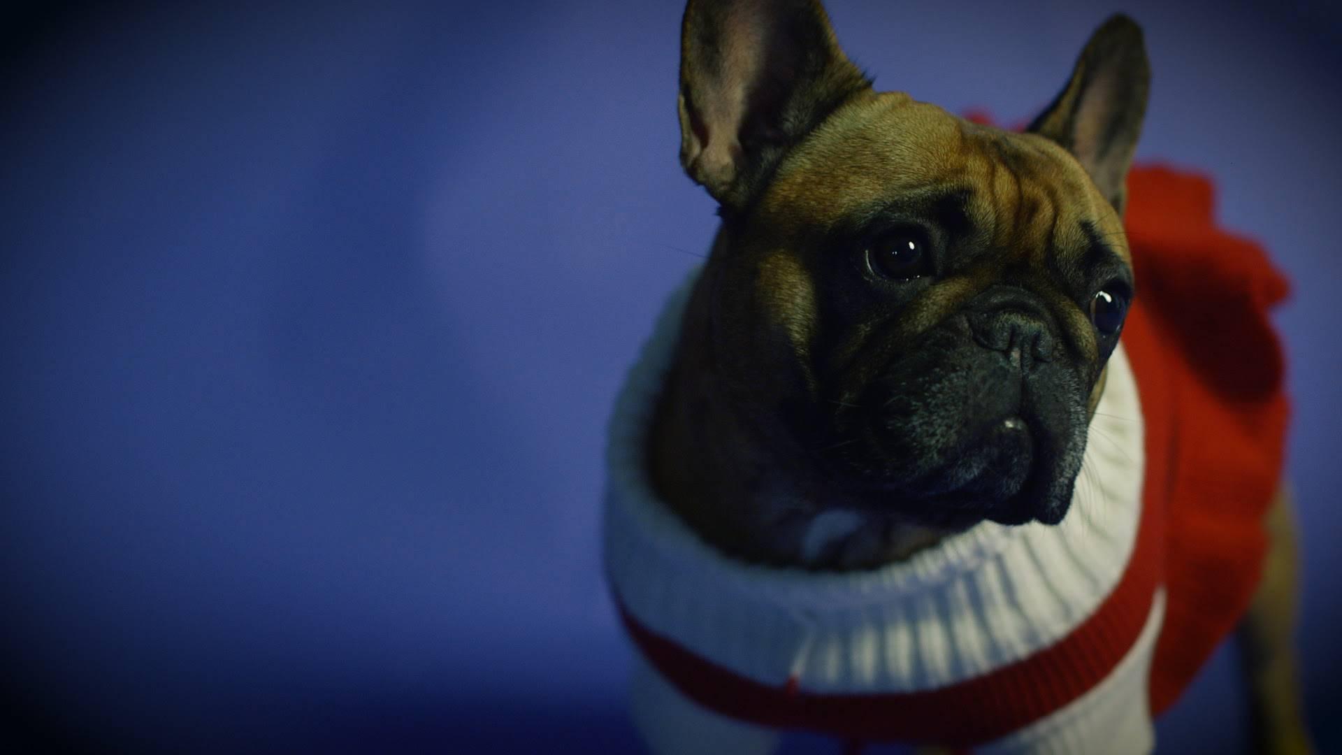 Božićna poslastica: Novi singl Igora Geržine zagrijat će srca
