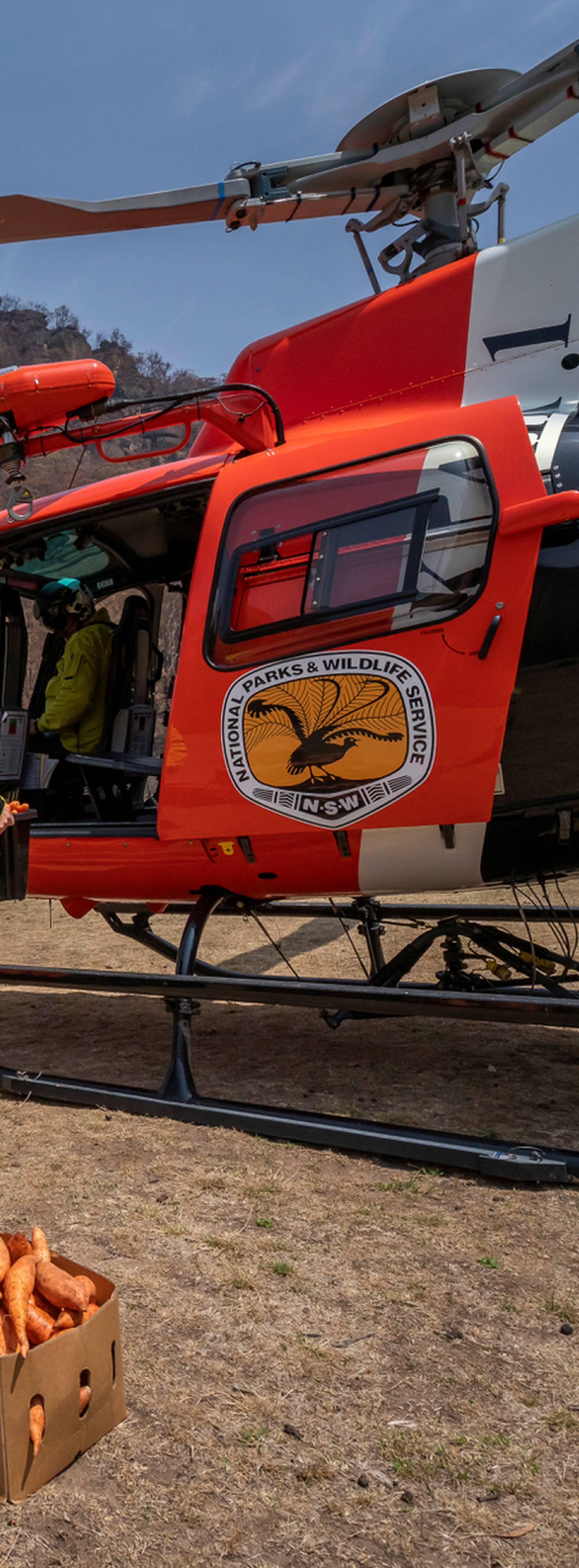 U Australiji gladne životinje nakon požara hrane iz zraka