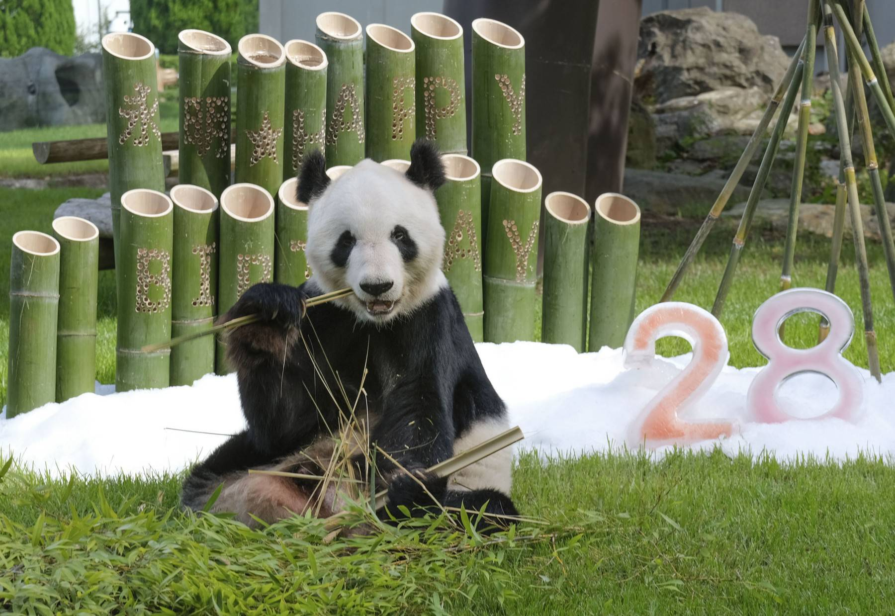 28th birthday of giant panda at western Japan zoo