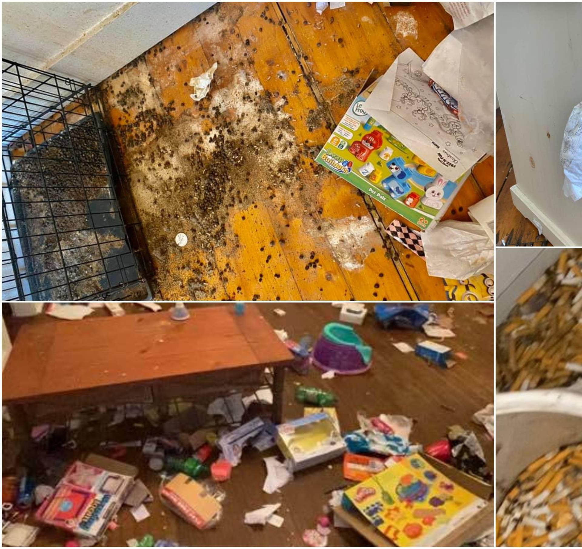 Podstanari iz pakla: Izmet po zidu, urin im curi u stan ispod