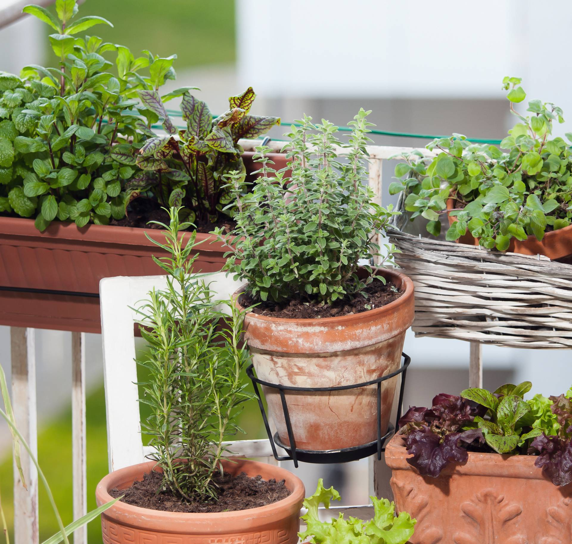 Pametno i korisno: Na balkonu posadite špinat, rajčice i kelj