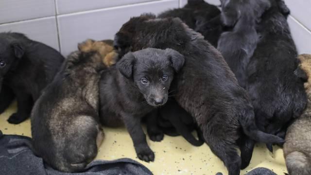 Ostavili ih u kutiji: 11 slatkih štenaca traže novi i topli dom