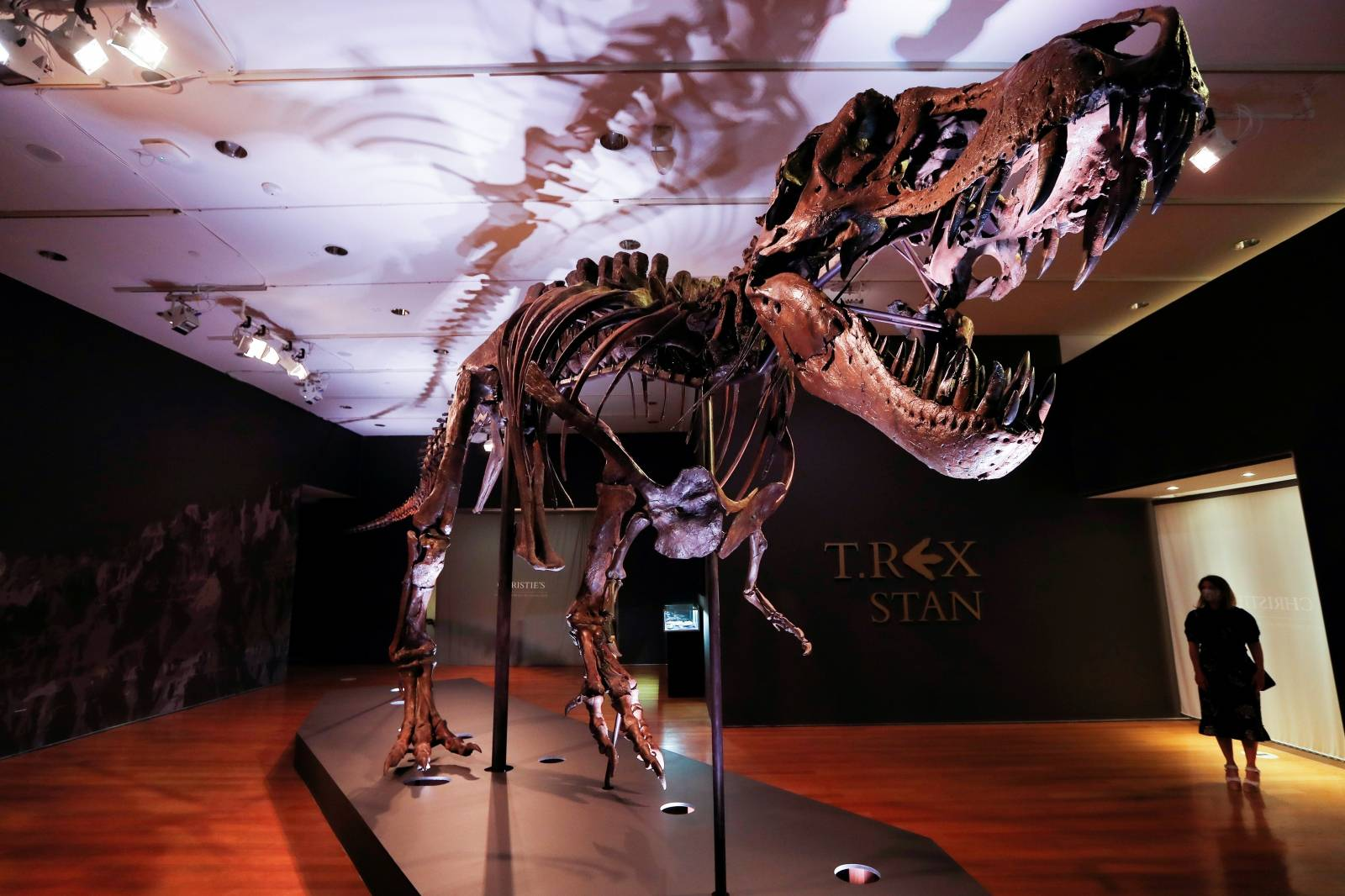 "Tyrannosaurus Rex skeleton ""STAN"" on display ahead of being auctioned by Christie's in New York"
