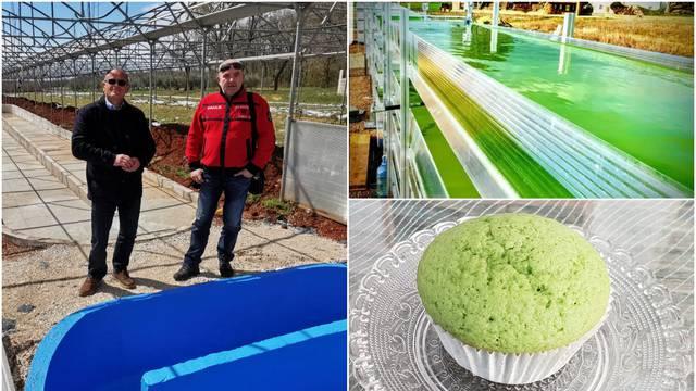 Poduzetnik Palokaj će u Istri uzgajati alge: One su budućnost u industriji pića i pekarstvu