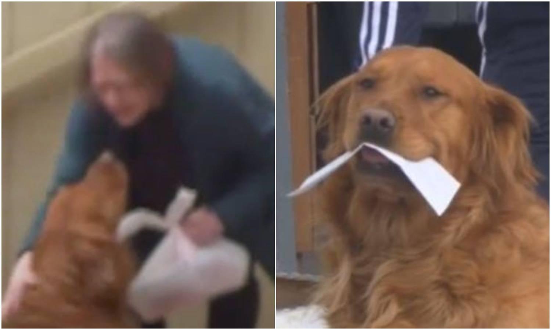 Zlatan pomagač: Pas susjedi u izolaciji redovito odnosi hranu