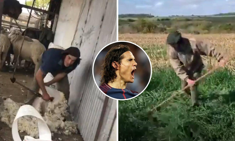 Bogataš Cavani rinta na farmi: Striže ovce, muze krave, kosi...