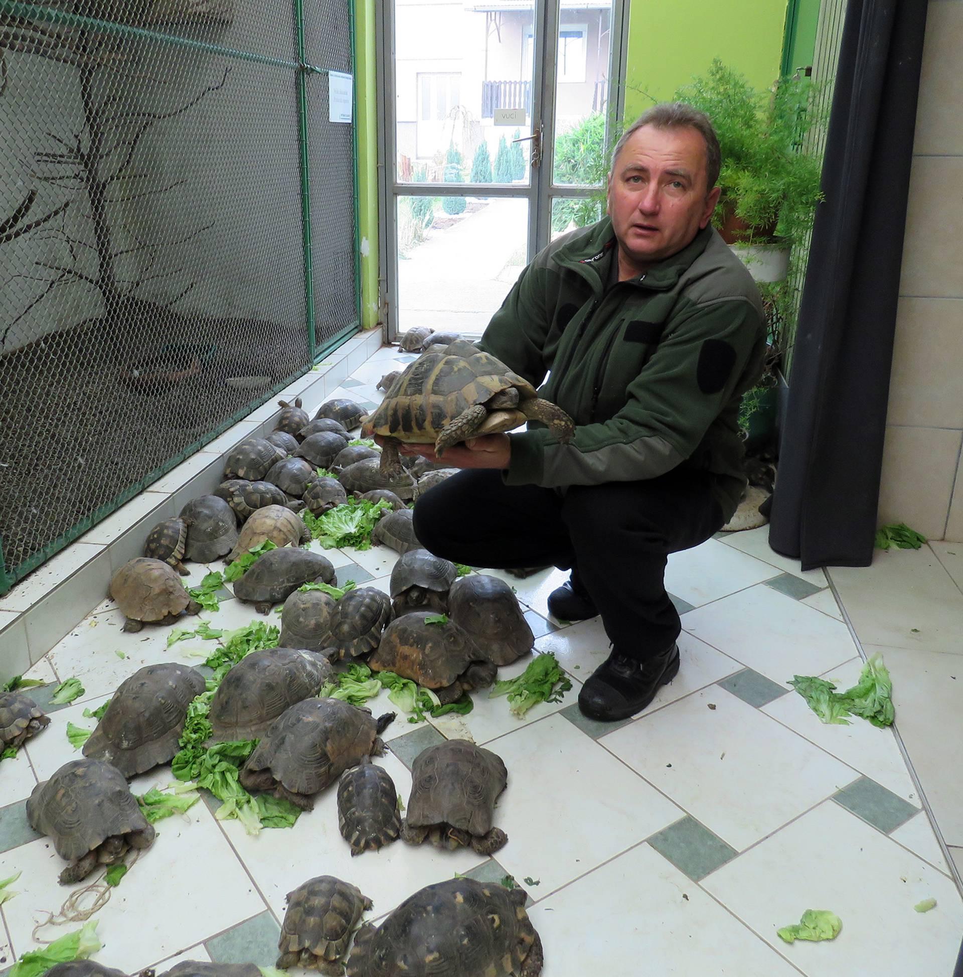 Udomio sam čak 715 kornjača te ih sada hranim salatom...