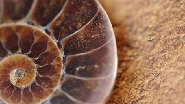 Prvi život na Zemlji: Otkrili su fosile stare 2 milijarde godina