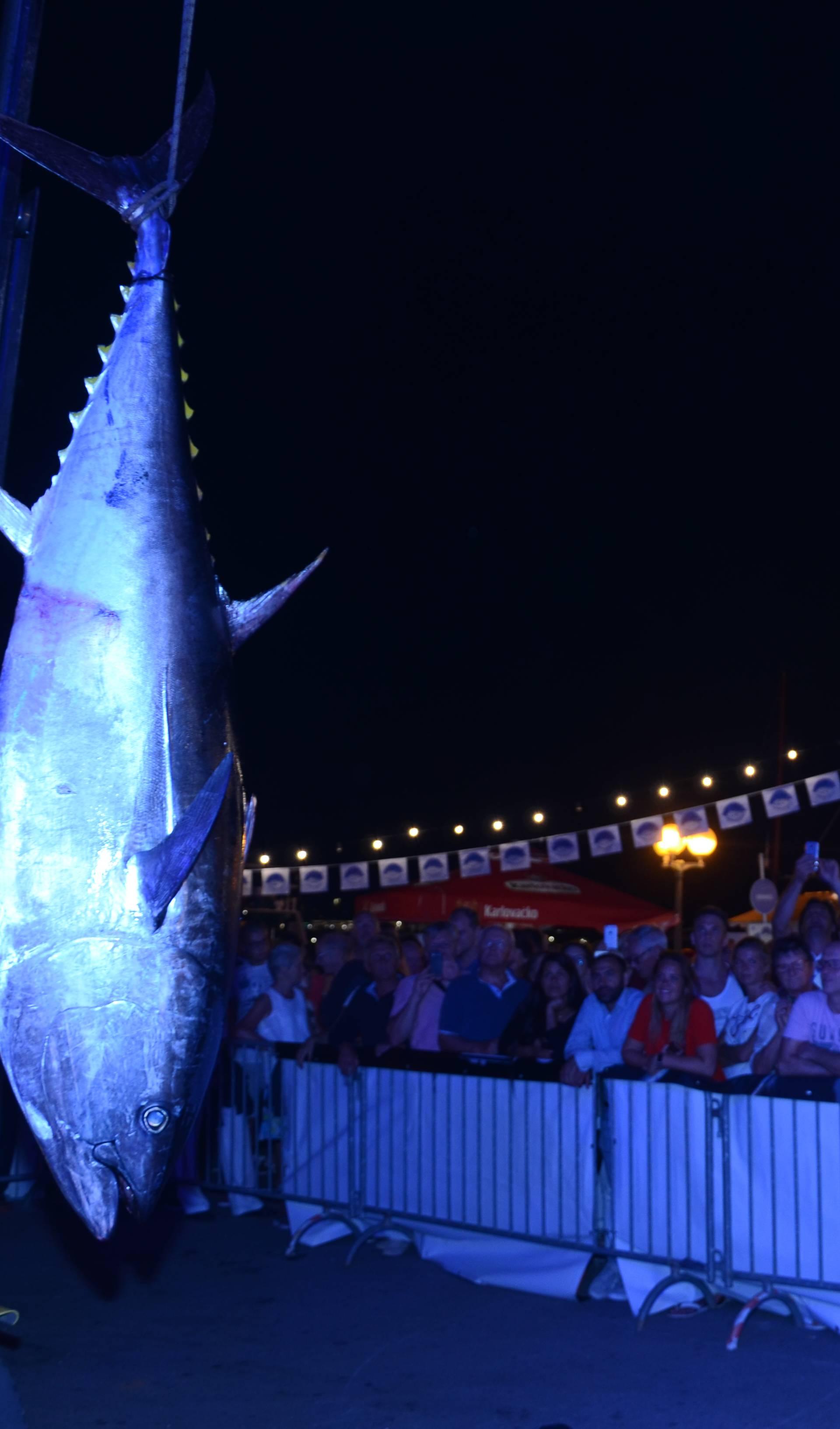 Kod Poreča 300 ribiča: Prvog dana ulovili tunu od 110 kg